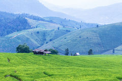 Landscape of the lined Green terraced rice field Royalty Free Stock Images