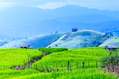 Landscape of the lined Green terraced rice field Stock Photos