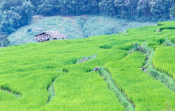Landscape of the lined Green terraced rice field Stock Images
