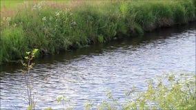 Landscape little river. Slowly flowing water stock footage