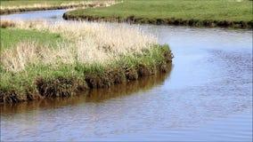 Landscape little river. Slowly flowing water stock video