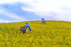 Landscape of liushidan mountain stock photography