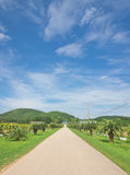 Landscape of local road under blue sky Stock Photo