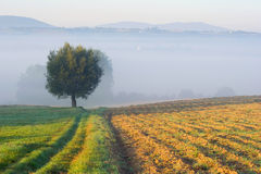 Landscape with a lone tree Stock Image