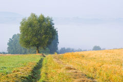 Landscape with a lone tree in fog Stock Photography