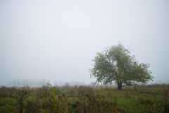 Landscape lone tree. In the fog Stock Photo
