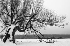 Landscape with a lone tree standing among the snow. Royalty Free Stock Photography