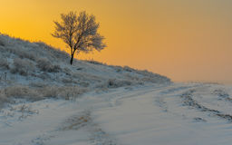Landscape with lonely apricot tree on a hill at sunset time and  winter season Stock Image