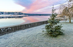 Landscape with a lonely frosted fir near a river Royalty Free Stock Image