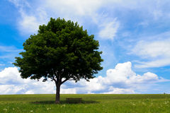 Landscape - lonely maple tree on green field, park bench Stock Images