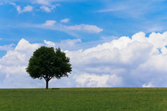 Landscape - lonely maple tree on green field, park bench Stock Photo