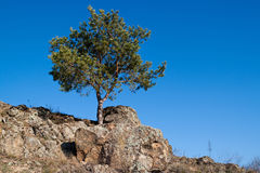 Landscape with a lonely pine tree on the cliff Stock Photography