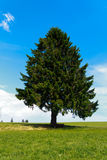 Landscape - lonely pine tree on green field, park bench Stock Images