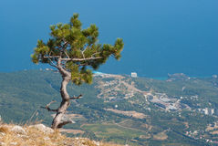 Landscape with lonely pine-tree growing on the edge of precipice Stock Photo