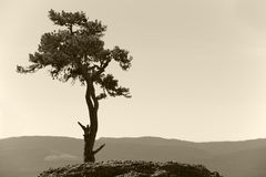 Landscape with lonely pine tree and mountain in sepia tone Stock Photography
