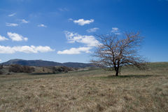 Landscape with lonely tree Royalty Free Stock Photos
