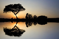 Landscape with Lonely tree. Beautiful African Landscape with Lonely tree in the savanah at sunset Stock Photo