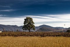 Landscape of lonely tree and abandoned car with flying vultures. Landscape of a lonely tree and an abandoned car with vultures flying around in the Pyrenean royalty free stock images