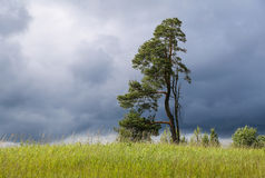 Landscape with lonely tree and dark stormy sky. 