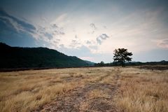 Landscape Lonely Tree in The Field Mountain Stock Photo