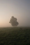 Landscape with lonely tree in fog Royalty Free Stock Image