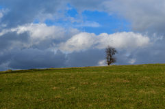 Landscape with lonely tree Stock Images