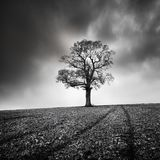 Landscape with Lonely tree