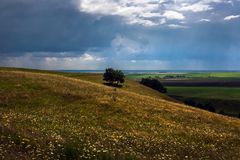 Landscape with a lonely tree. On a slope against a thunder-storm Royalty Free Stock Photography