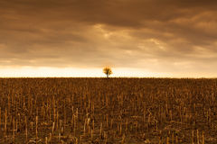 Landscape with lonely tree Stock Photography