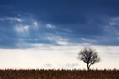 Landscape with lonely tree Stock Photos
