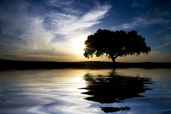 Landscape with lonely tree with water reflexion. In sunset stock photo