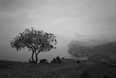 Landscape with a lonsome tree. Lonely tree on the mountain Stock Photo