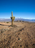 Landscape in Los Cardones national park Stock Photography
