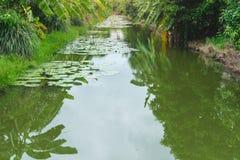 Landscape lotus pond in banana farm stock photos