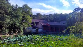 Landscape. A lotus pond  in a park, so green and transparent after a rainning Stock Photo