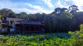 Landscape 2. A lotus pond  in a park, so green and transparent after a rainning Royalty Free Stock Photo