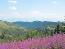 Landscape in the Low Tatras Stock Image