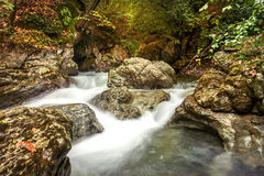 Landscape lush mountain river. Landscape mountain river in the forest Royalty Free Stock Photo