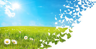 Landscape made of flying butterflies Stock Photo