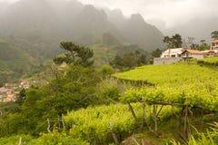 Landscape of Madeira Royalty Free Stock Photos