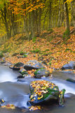 Landscape magic river in autumn forest. Royalty Free Stock Photos