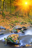 Landscape magic river in autumn forest. Royalty Free Stock Images