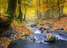 Landscape magic river in autumn forest. Stock Photos