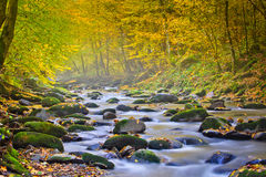 Landscape magic river in autumn forest at sunlight. Royalty Free Stock Photography