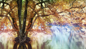 Landscape magical forest stock photography