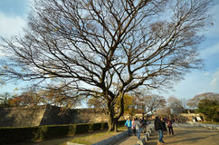 Landscape of main entrance of Osaka castle in Osaka Royalty Free Stock Photos