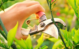Landscape maintenance Stock Photos