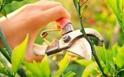 Free Landscape Maintenance Stock Photos - 10953923
