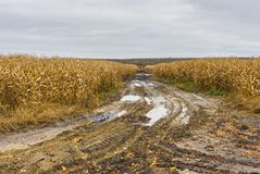 Landscape with maize field Royalty Free Stock Photography