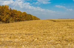 Landscape with maize field at harvest time Stock Photo